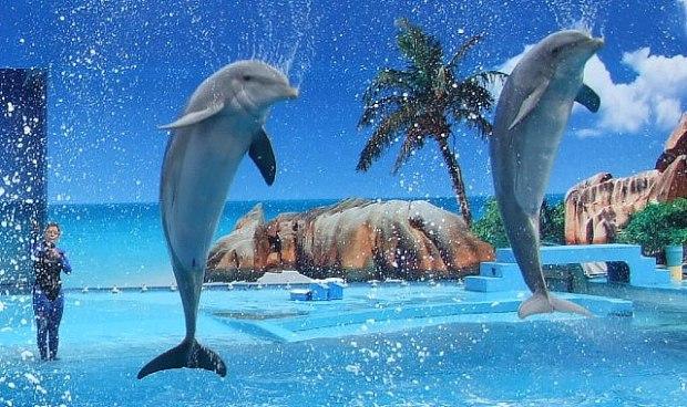 zoomarine-dolphins